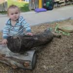 Arwen climbing on the log